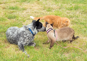 Two cats and a dog having a discussion outdoors