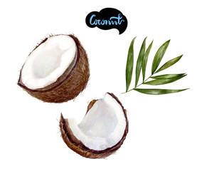 coconut watercolor illustration
