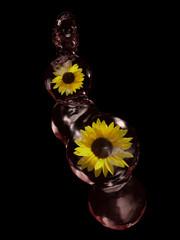 Sonnenblumen in Wasserkugeln auf schwarzem Hintergrund . 3d render