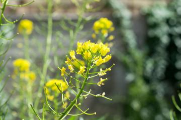 Photo of yellow wildflowers.