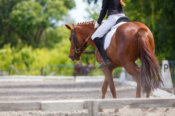 Girl riding sorrel horse on dressage competition. Rear view with copy space. Equestrian sport background