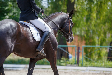 Girl riding horse on dressage competition. Rear view with copy space. Equestrian sport background
