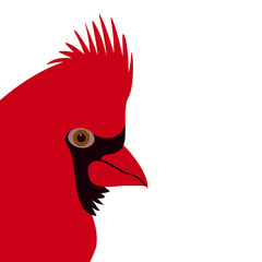 cardinal  bird face vector illustration flat style profile