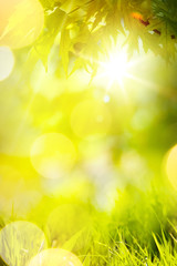 Fototapete - Abstract spring or summer  Background; green grass and tree leaves