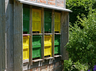 Bees swarming in and out green and yellow behive