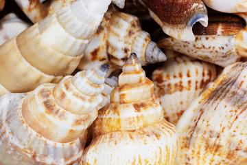 Sea shells collection