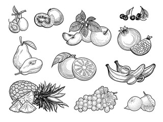 Fruit crop. Kiwi, cherry, tangerine, Apple, banana, pear, orange, grapes, pineapple, plum, pomegranate. Illustration. Isolated on white background.