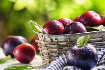 Basket with ripe juicy plums on table