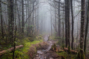 Hiking through foggy woods in New Hampshire.