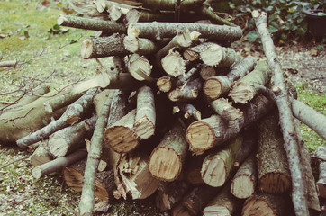 Wood Pile Stack Firewood