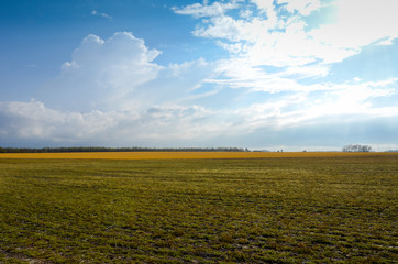 Green Field in Spring with Blue Sky and White Clouds