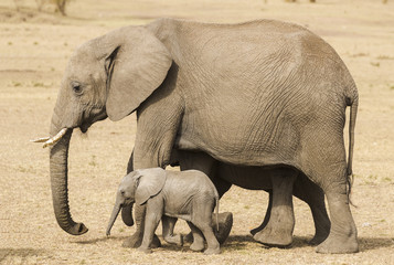 Female elephant with her baby