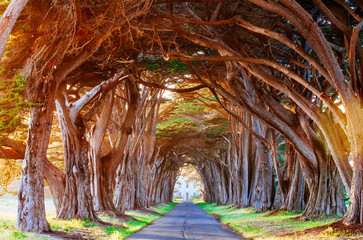 Wall Murals Magenta Tree Tunnel
