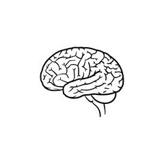 Human brain hand drawn outline doodle icon. Brain as a concept of mind, thinking and idea vector sketch illustration for print, web, mobile and infographics isolated on white background.
