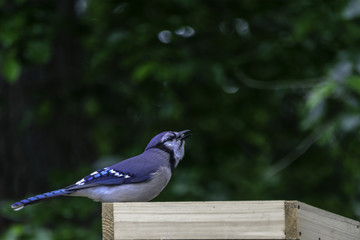 a blue jay sits on a bird feeder