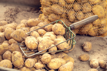 New potatoes in the bazaar with shallow depth of field.