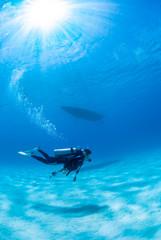 真っ青な海を泳ぐダイバー