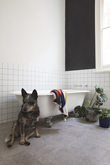 Modern, clean white bathroom with clawfoot bath
