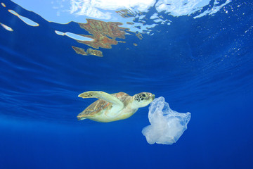 Plastic pollution environmental problem. Turtles can mistake plastic bags for jellyfish