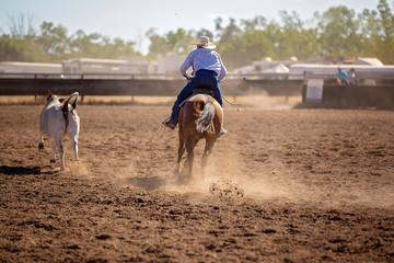Cowboy Herding A Calf In Campdraft Rodeo Event