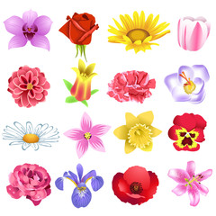 vector set of different garden flowers