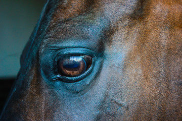 Eye of a horse on a dark background