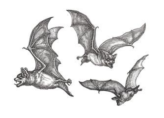 Рисунок, три летучие мыши, чёрно-белая графика.