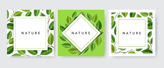Card frame set with branches and leaves for nature design. Vector illustration, paper card collection with three designs