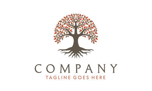 Tree of Life, oak banyan leaf and root seal emblem stamp logo design inspiration