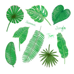 A set of hand drawn vector tropical leaves.