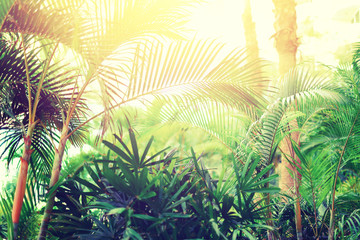 Tropical palm tree with sun bokeh effect and light leaks. Abstract background. Summer vacation, travel adventure concept. Vintage tone filter. Banner