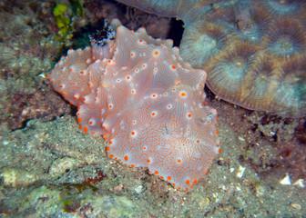 Farbenprächtige Schnecke im Meer
