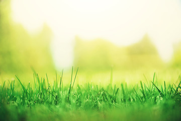 Fresh green spring grass with sun leaks effect, copy space. Soft Focus. Abstract nature background. Banner