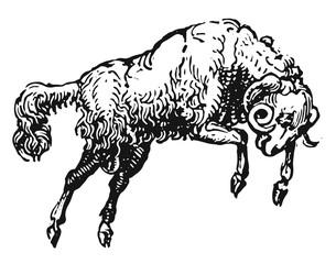 Ram #vector #isolated - Widder