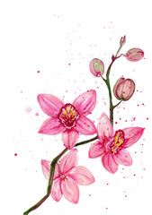 Watercolor pink orchid bouquet on white background