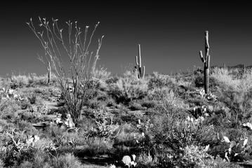 Infrared Sonora Desert Arizona