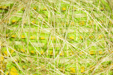 Spring yellow-green straw background.Rustic background.Texture of straw.