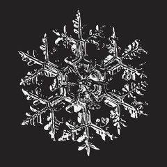 White snowflake on black background. This vector illustration based on macro photo of real snowflake: large stellar dendrite snow crystal with massive hexagonal center and ornate arms.