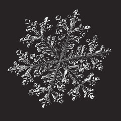 White snowflake on black background. This vector illustration based on macro photo of real snow crystal: small stellar dendrite with fine hexagonal symmetry, complex ornate shape and six elegant arms.