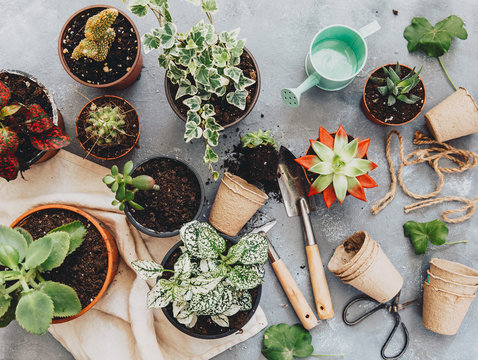 Overhead view of houseplants and gardening tools