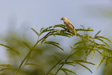 Portfait of young female sparrow on tree