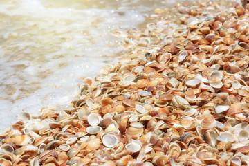 Seashells on a sandy beach near the sea