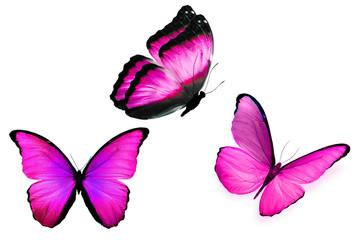 Три бабочки фиолетового цвета с разных ракурсов, изолированы на белом фоне