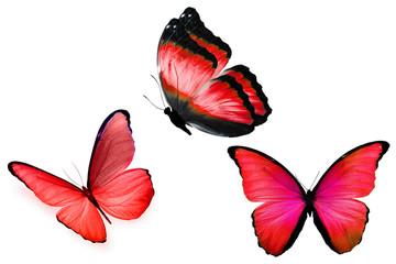 Три красные бабочки с разных ракурсов изолированы на белом фоне