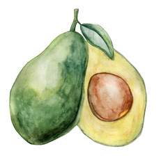 Watercolor avocado illustration with visible seed, branch and leaf