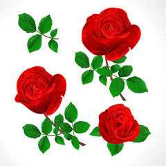 Buds red  roses with  leaves vintage  on a white background set three vector illustration editable hand draw