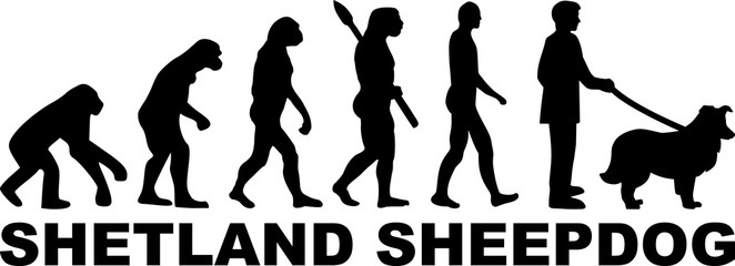 Shetland Sheepdog evolution word