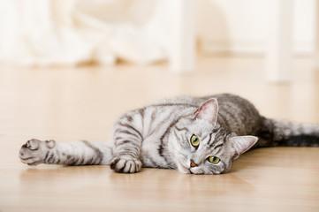 Getigerte Katze in der Wohnung