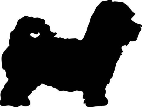 Maltipoo silhouette black