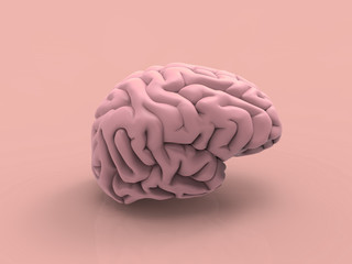 Fototapeta Human Brain Pastel 3D Render
